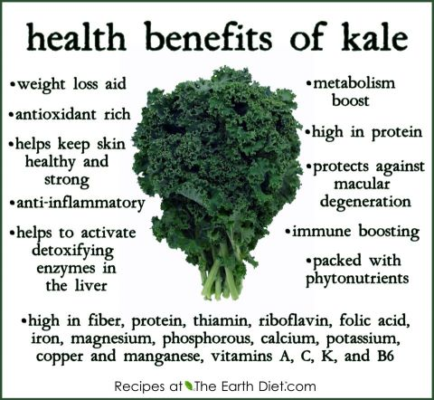 health benefits of kale including weight loss aid antioxidant rick healthy skin anti-inflammatory detoxifying enzymes metabolism boost high in protein immune boosting packed with phytonutrients