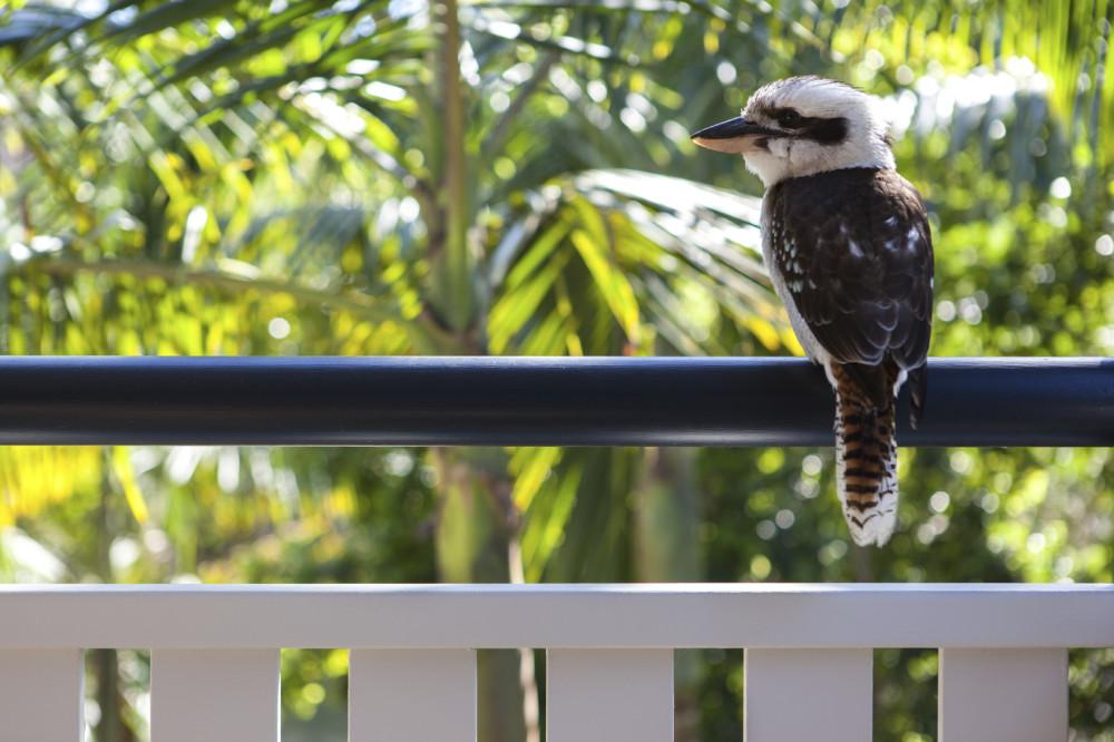 kookaburra | Byron Bay Retreat